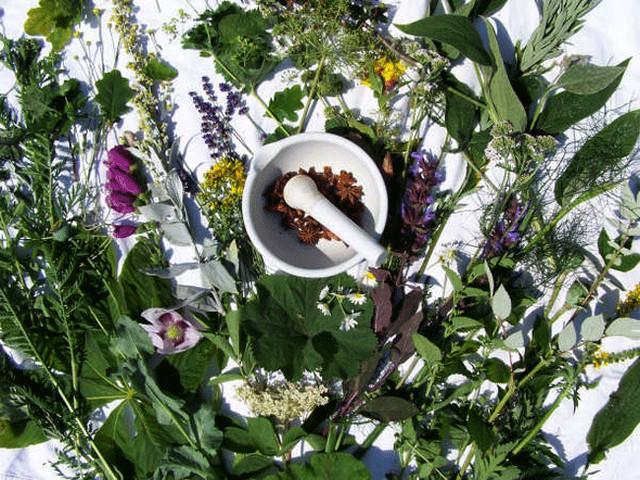 Лекарственные растения - средство от многих недугов :: Здоровье :: Очарование