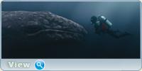 Все любят китов / Big Miracle (2012) BDRip 1080p