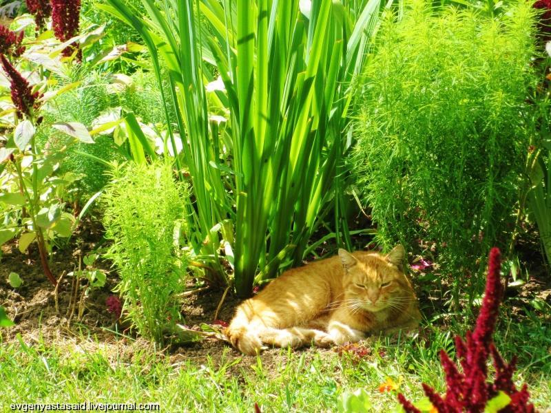 Желтый цветок растет в траве