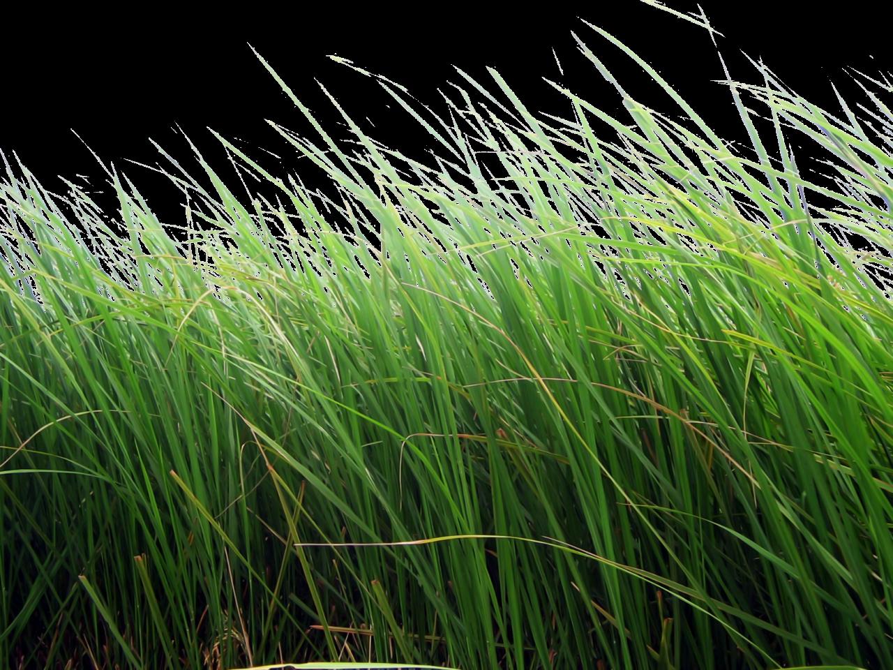 лужайка в лесу фото