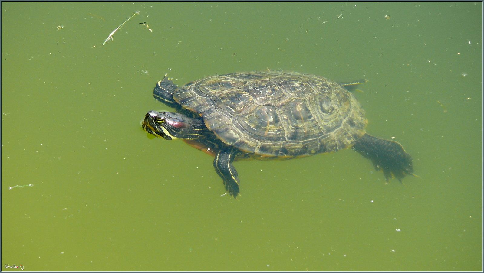 http://s2.hostingkartinok.com/uploads/images/2012/09/0167061211dcb37890db2c2ddf56df85.jpg