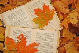 Твоя книга