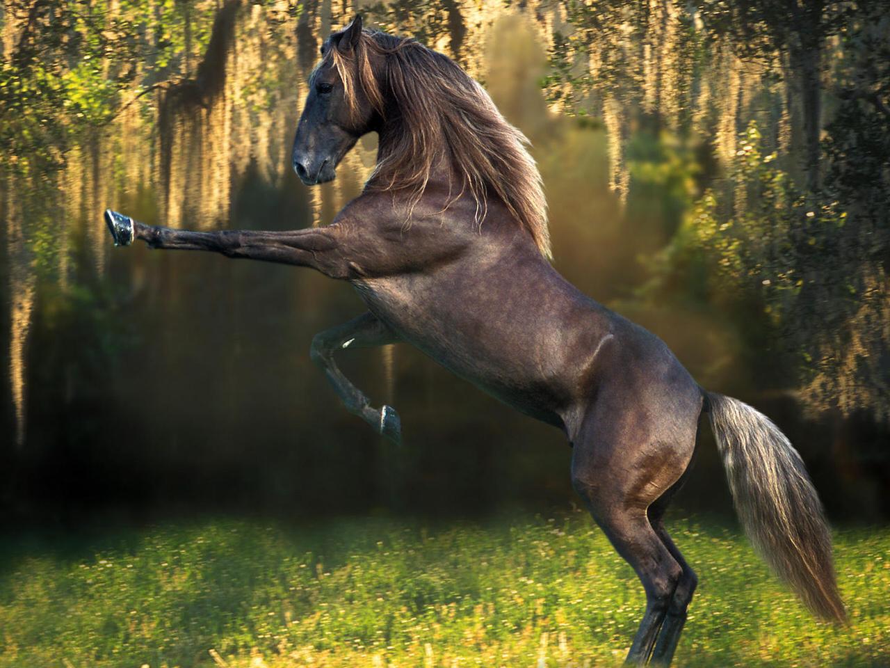 лошади обои на рабочий стол 1280х1024 № 489497 без смс