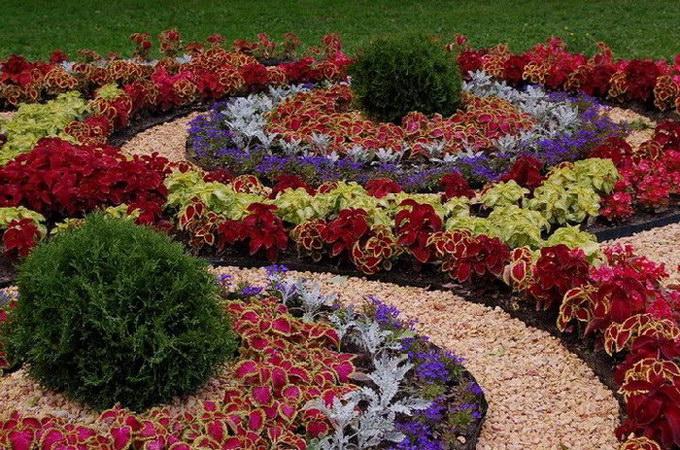 отличительные черты клумб и цветников