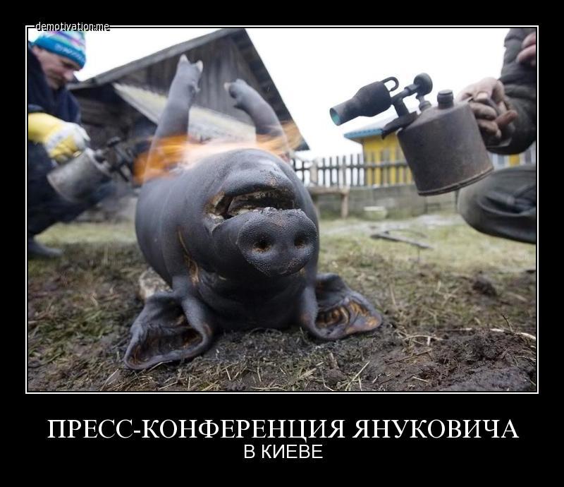 Пресс-конференция Юлии Тимошенко - Цензор.НЕТ 8269
