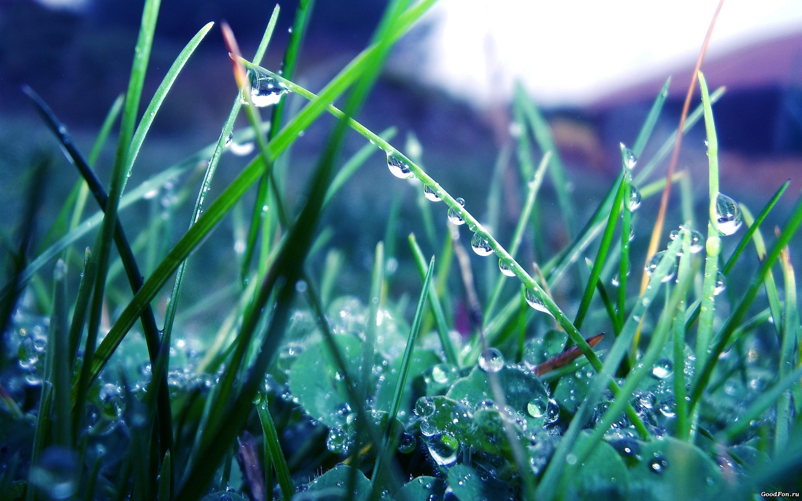 природа роса вода капли макро трава nature Rosa water drops macro grass загрузить