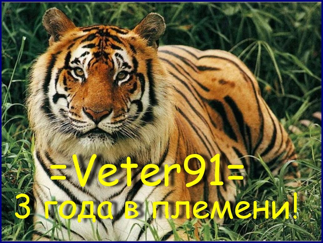 Фото тигров, фотографии тигров